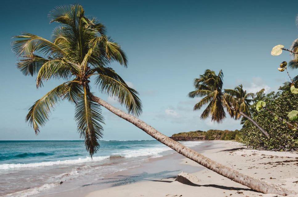 Que faire en Martinique ?